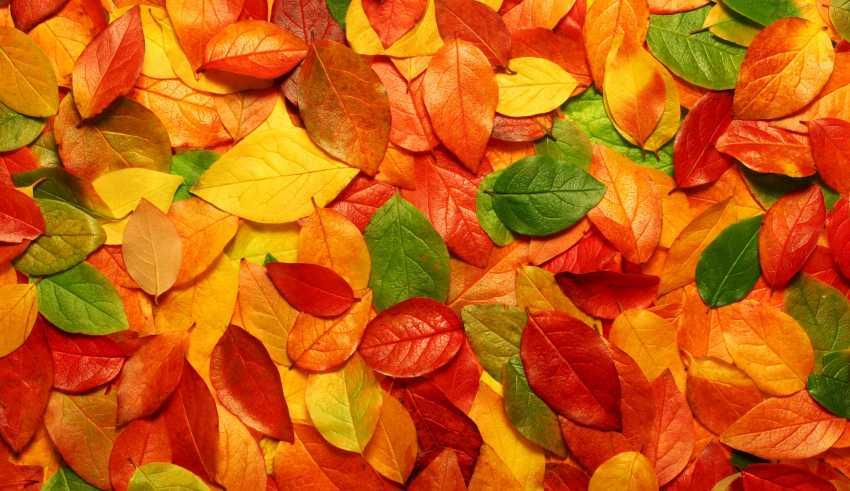استایل مناسب بانوان در پاییز