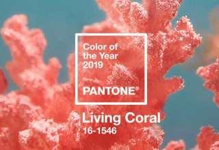 مرجانی رنگ سال 2019