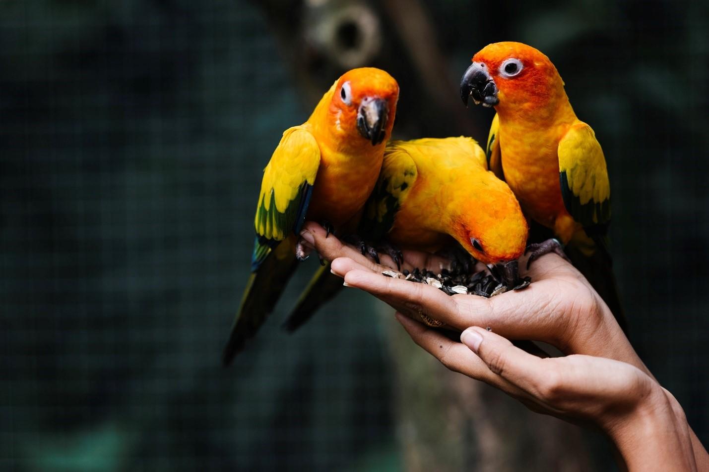 نگهداری از پرنده