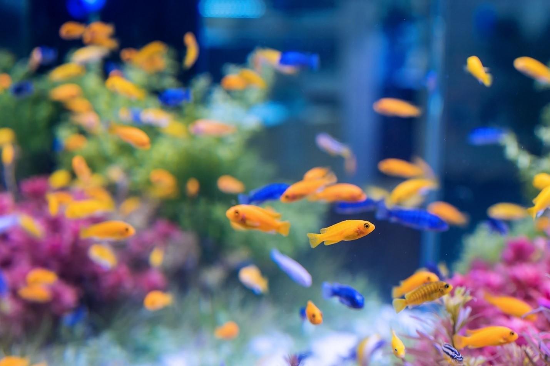 نگهداری از ماهی- داشتن آکواریوم ماهی